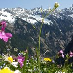 6 pași pentru vacanța perfectă, fără păcăleli online